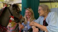 Miniature horse visits hospital