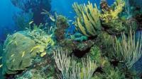 A coral reef landscape
