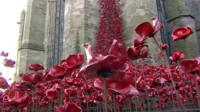 The poppies at Hereford Cathedral