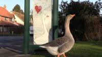 Gordon the goose by bus stop