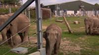 Elephants at Blackpool Zoo