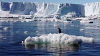 Penguin on melting ice block