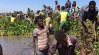 People clearing weed in Lake Tana