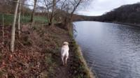 Mabel the dog in Roundhay Park