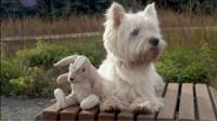 A dog and his stuffed bunny friend