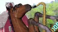 Correct horse