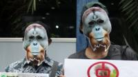 Indonesia Activist Campaign To Save Orangutan, March 1 2019
