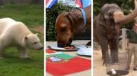 Animals choosing World Cup teams