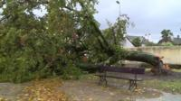 An uprooted tree in French storm