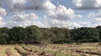 Hay tornado in Leicestershire field