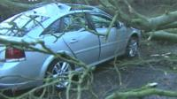 Tree fallen on car