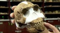 Naledi skull