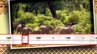 Elephant timeline