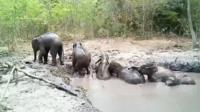 elephants in the pit