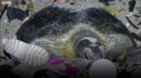 Проблемы черепахи