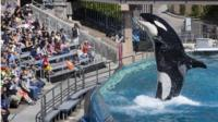 Visitors are greeted by an Orca killer whale
