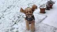 A dog in the snow.
