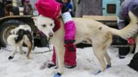 A young child hugs a dog before the ceremonial start of the Iditarod Trail Sled Dog Race that begins