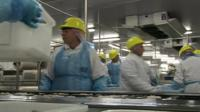 Fish factory workers in overalls and hard hats on production line