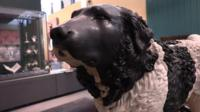 Bashaw dog