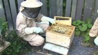 bee keeper inspecting the hive