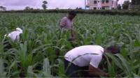 Farmers in Maharashtra