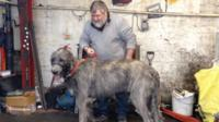 Ahaon with his owner Paddy Grice