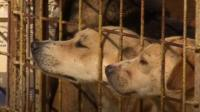 Dogs looking from cage