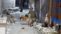 Some of India's stray dogs