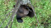 Camera traps reveal how grizzly bears use rubbing trees to scratch those hard to reach places!