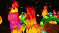 Rooster lanterns