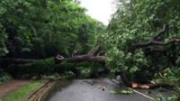 A tree felled by lightning in Lambeth.