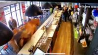 Лошадь в баре