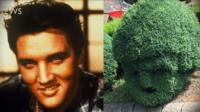 Elvis hedge