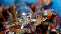 Lobster fishermen and traders in Maine have become the victims of an intensifying trade war between Donald Trump's administration and China.