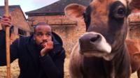 Newsbeat reporter Nesta McGregor poses with a cow
