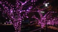 Cherry tree lights in Tokyo
