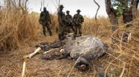 Dead elephant in DR Congo