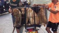 Dogs in cage on motorbike in Yulin, China, 21 June 2016
