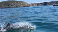 Clet the dolphin - who was believed to swim alone - was spotted with a larger group off the Pembrokeshire coast.