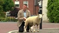 BBC News reporter Conor Macauley was filming a piece to camera when nature called for Button the lamb