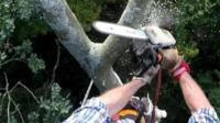 Man using chain saw to cut tree branches