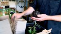 Garden centre reduces plastic use