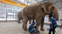 Elephant having an X-ray