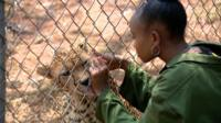 Some visiting Diji the cheetah