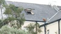 Puppy stuck in gutter on roof