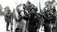 George the horse helping the Commandos on D-Day.