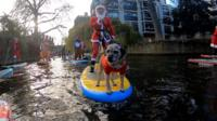 Dog on a stand-up paddleboard