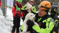 Emergency workers have rescued three puppies from the hotel destroyed by an avalanche in central Italy.