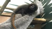 Pichiku at Bristol Zoo